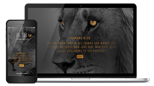 Through the Eyes of a Lion - Wallpapers